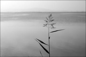 td-solitude4