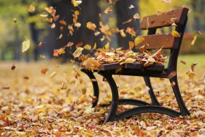 autumn-leaves-in-wind