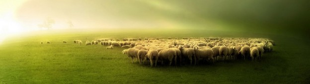 cropped-animal-pictures-sheep-wallpapers-photos-sheep-wallpaper-86