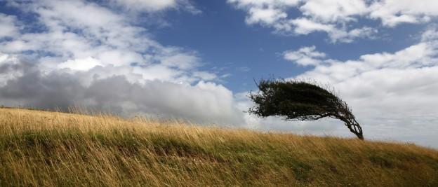 one tree on a field deformed by wind