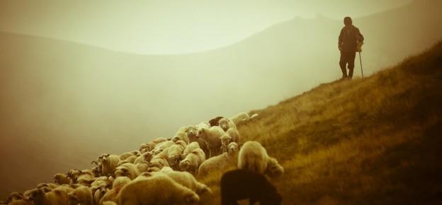 pastor-shepherd2